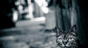 『猫が鳴く』 洒落怖名作まとめ【長編】