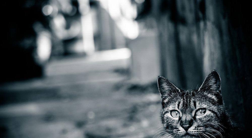 『猫が鳴く』|洒落怖名作まとめ【長編】