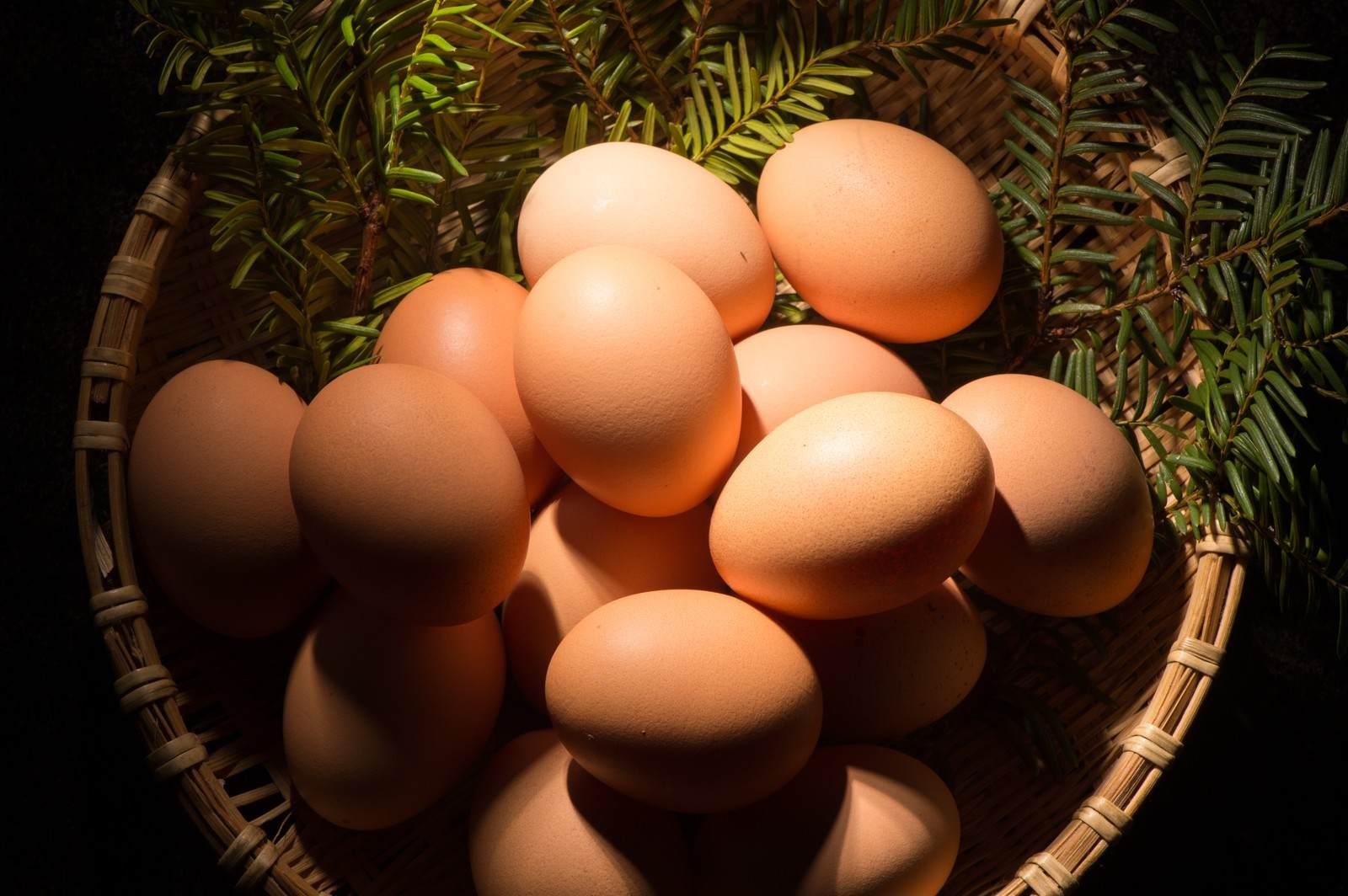 『卵』|洒落怖名作まとめ【短編・中編】