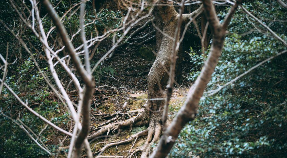 『地元に伝わる不老不死の「フーライ様」』|本当にあった怖い話【オカルト・都市伝説】