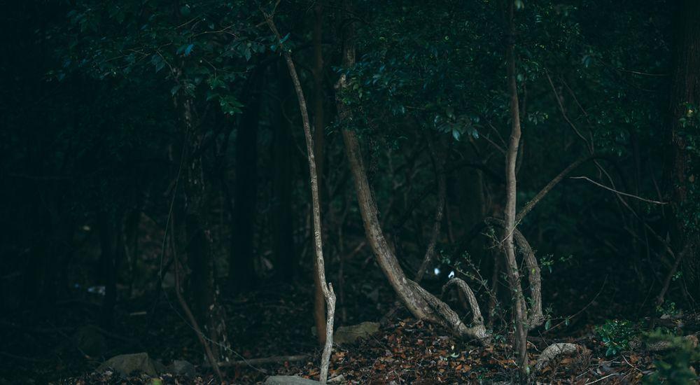 【名作 長編】『中つ森の山神様』|本当にあった怖い話・オカルト・都市伝説