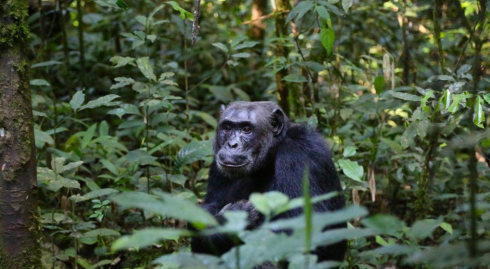 『山で猿を見たら目を隠して逃げろ』- 長編 名作 怖い話 -