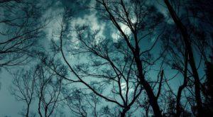 『緑ヶ淵』くらげシリーズ|洒落怖名作まとめ【ホラーテラーシリーズ】