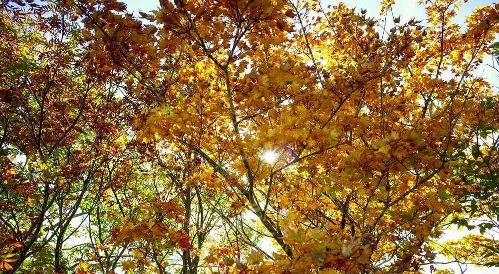 『転校生と杉の木』くらげシリーズ|洒落怖名作まとめ【ホラーテラーシリーズ】