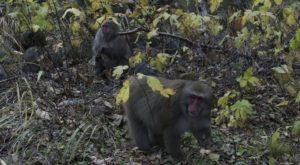 『猿にまつわる怖い話』全2話 洒落怖名作まとめ【長編】