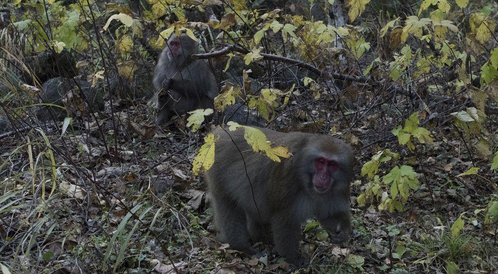 『猿にまつわる怖い話』全2話|洒落怖名作まとめ【長編】