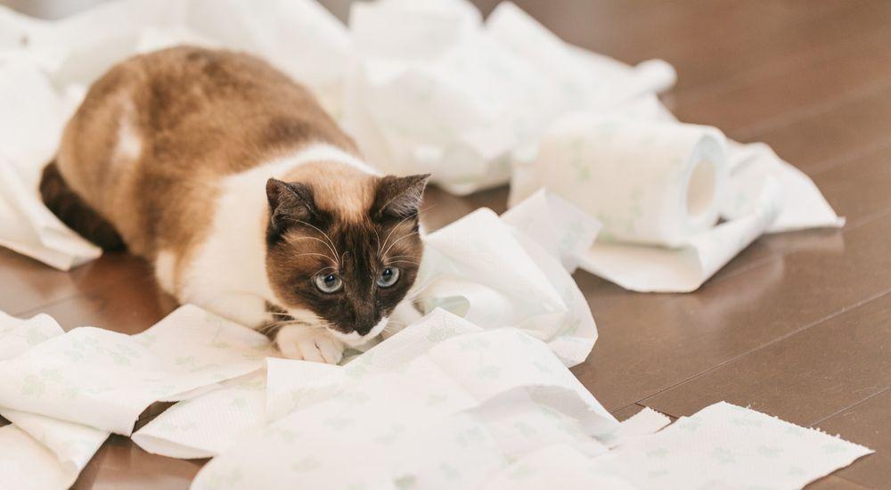 『猫屋敷』特殊清掃業にまつわる怖い話|洒落怖名作まとめ