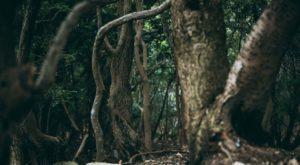 『スクエア』妖怪退治の仕事シリーズ|洒落怖名作まとめ【ホラーテラーシリーズ】