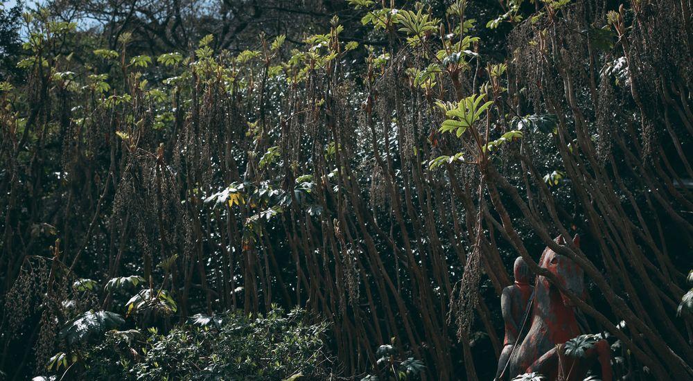 『先生の話 その5』妖怪退治の仕事シリーズ|洒落怖名作まとめ【ホラーテラーシリーズ】